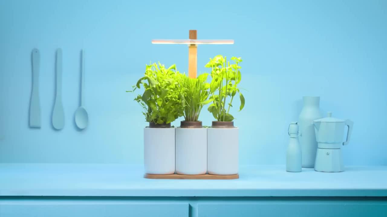 mini potager d 39 int rieur lilo pr t pousser jardini re. Black Bedroom Furniture Sets. Home Design Ideas